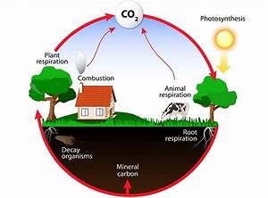 Energy Flow In Ecosystem