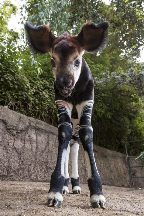 aliso laguna news san diego zoo animal care staff