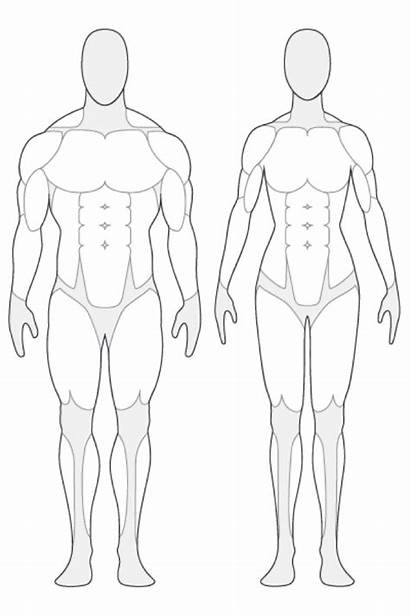 Outline Human Clipart Anatomical Figure Muscle Anatomy