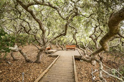 The Magical El Moro Elfin Forest. Photograph By Jamie Pham