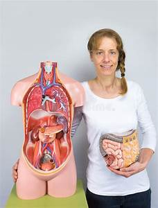 Woman Showing Intestines Model And Human Body Stock Photo