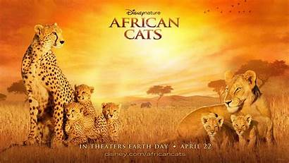 Cats African Disney Wallpapers Africa Nature 1920