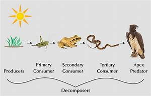 What U0026 39 S The Difference Between Food Chain And Food Web