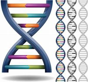 Study Shows Four-Stranded 'Quadruple Helix' DNA Structure ...