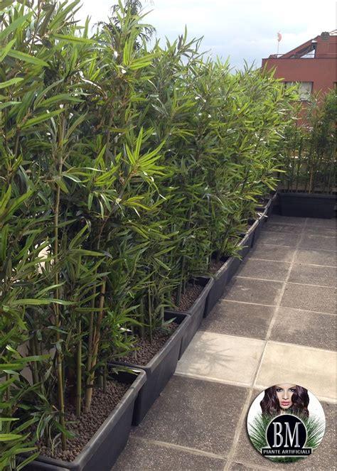 listino prezzi piante da giardino siepe di bambu prezzo