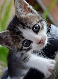 Cute Baby Kittens with Big Eyes