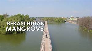 Bekasi Punya Hutan Mangrove  Jembatan Cinta  Tarumajaya