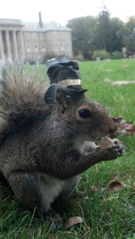 sneezy  squirrel loves wearing hats  pics pleated