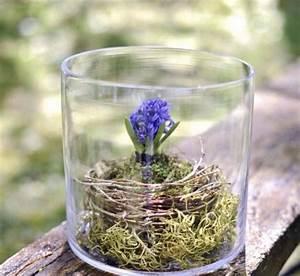 Bilder Im Glas : hyazinthe im glas hyazinthen im glas ziehen pflanzen und pflege nach der bl te hyanzinthe im ~ Orissabook.com Haus und Dekorationen