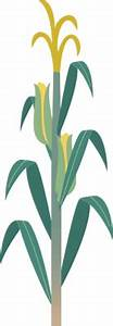 13 Corn Plant Icon.png Images - Corn Indoor Houseplants ...