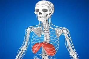Diaphragm Exercises Guide