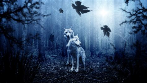 forest wolves  wallpapers hd wallpapers id