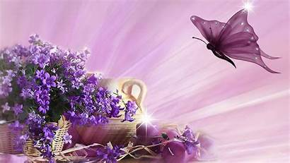 Butterfly Spring Wallpapers 1080p Outdoors