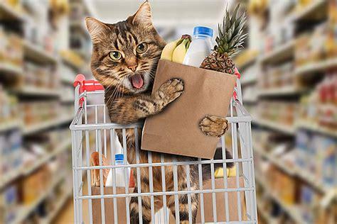 cat   tude turns supermarket   sweet pad