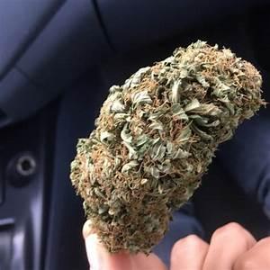 smoke weed everyday on Tumblr