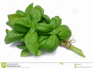 Basil Herb Clipart - Clipart Suggest