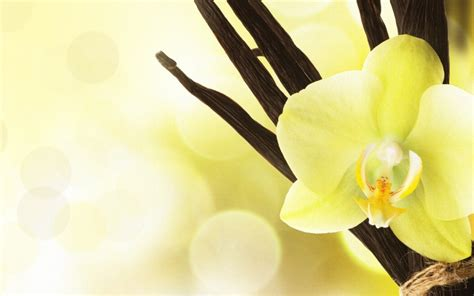 enjoy   desktop wallpaper santa barbara international orchid show