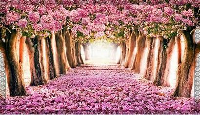 Spring Computer Desktop Widescreen Wallpapersafari