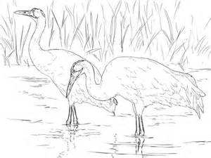 whooping cranes coloring page supercoloringcom