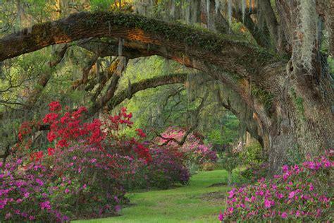 magnolia plantation and gardens style gardens at magnolia plantation and gardens
