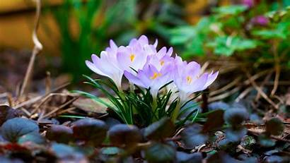 Spring Desktop Flowers Nature Wallpapers Backgrounds Background
