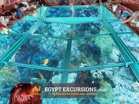 Glass Bottom Boat Egypt by Glass Bottom Boat Tour From Hurghada