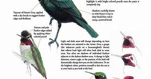 Laws Guide To Drawing Birds Iridescence