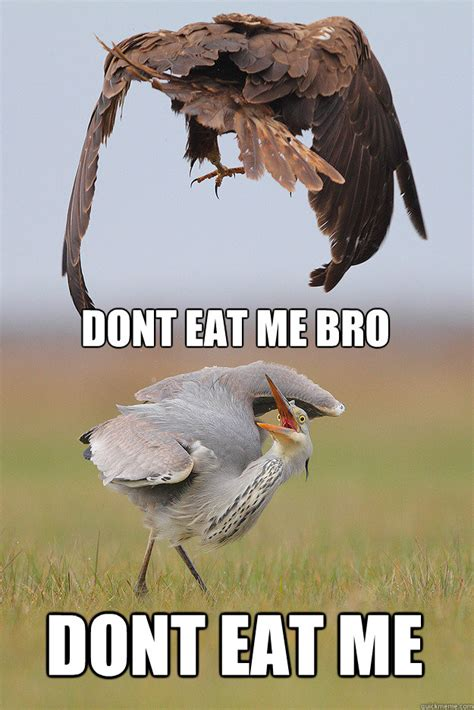 Eat Me Meme - dont eat me bro dont eat me dont eat me bro quickmeme