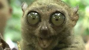 Tell Me More Slow Loris GIF - Find & Share on GIPHY