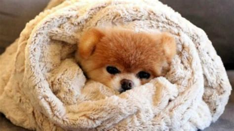 why does my shower keep going and cold how do i keep my warm in the winter snugglezzz prlog