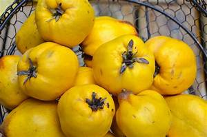 Quince - Real Natural Remedy - Healthy Food House