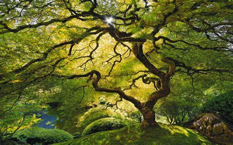 Beautiful Tree Wallpaper For Desktop by Tree Pictures Beautiful Nature Hd Desktop Wallpapers 4k Hd