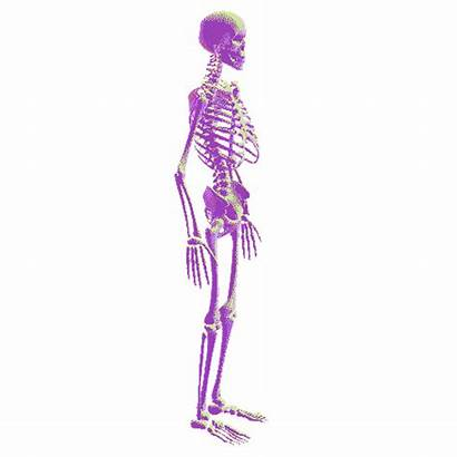 Clipart Skeleton Transparent Human Biology Vaporwave Gifs