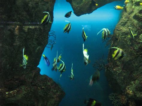 panoramio photo of grand aquarium de malo