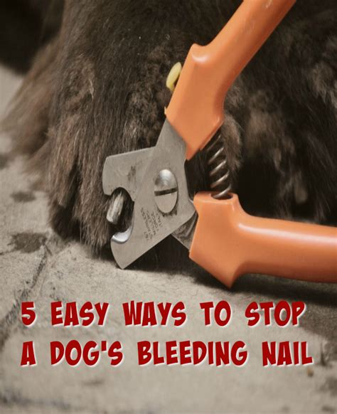 easy ways  stop  dogs bleeding nail mybrownnewfiescom