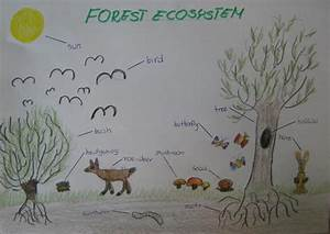 Ecosystem Drawing With Labels At Getdrawings