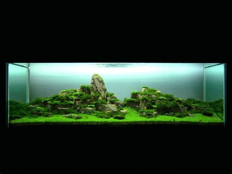 Fish Tank Aquascaping by Rip Takashi Amano Justin Fox