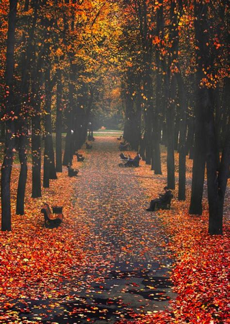 Aesthetic Girly Fall Backgrounds by Autumn Gis