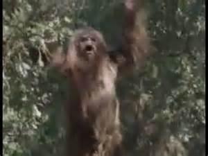 Bigfoot Sasquatch Skunk Ape