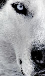 Download Animal Phone Wallpaper Gallery