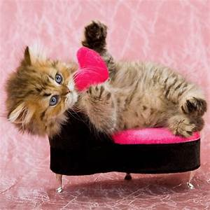 Valentine's Day Cards From the Cat   POPSUGAR Pets