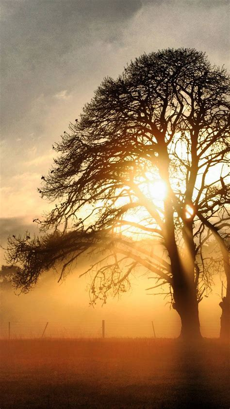 Beautiful Tree Phone Wallpaper by 17 Best Images About Stunning Silhouettes On