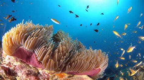 coral reef color the beautiful colors of coral reefs hd1080p