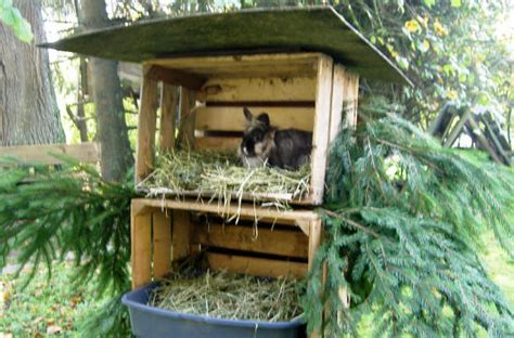 kaninchen auslauf selber bauen kaninchen im winter