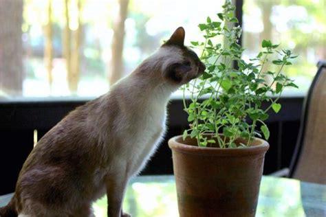 plants  grow  cats hgtv