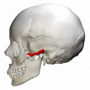 Zygomatic process of temporal bone - Wikipedia