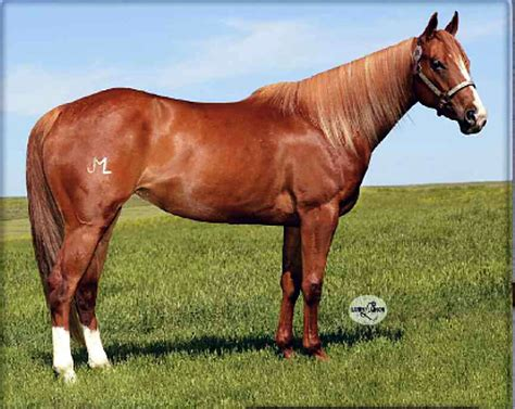 quarter horses horse frenchman colorado strawberry tsln frenchgirl buyer frenchmans sold