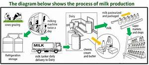 The Diagram Above Shows The Process Of Milk  Butter And
