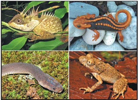 lizard newt frog  snake       species   discovered