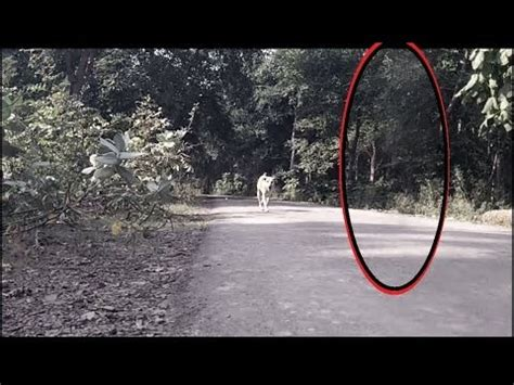 Real Ghost Dogs Caught On Camera
